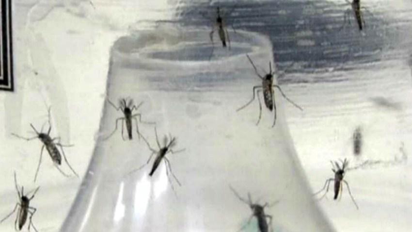 TLMD-mosquito-zancudo-zika--