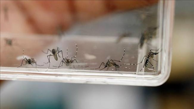 TLMd-mosquito-zancudo-zika-EFE-11405125w1
