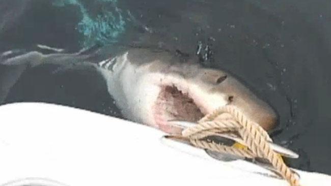 tlmd_tiburon_en_costa_de_ny_nj
