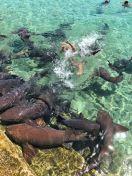 TLMD-bahamas-modelo-mordida-por-tiburon-nodriza-Katarina-Zarutskie