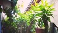tlmd_plantas_que_atraen_buenas_vibras_a_tu_casa_1
