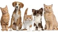 TLMD-perros-y-gatos-shutterstock_91233284-1
