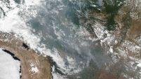 Además del daño ambiental, unas 500 especies están en peligro por el fuego. Mira las imágenes.