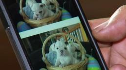 Estafa de adopción de mascotas gratis por internet