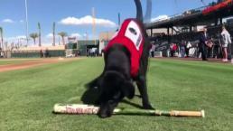 Finn: el perro recogebates estrella de Las Vegas