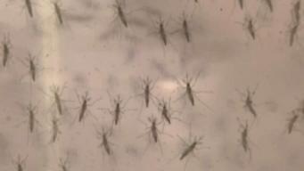 Aumentan casos del Virus del Nilo Occidental en el Condado Clark