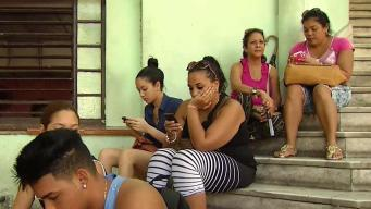 Avestruz: la palabra más buscada por cubanos en Internet