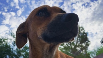 Johali Carmona nos presenta a su mascota adoptada