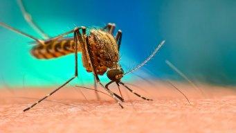 Reportan 2° caso de virus de Nilo en el sur de Nevada