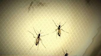 Reportan primera muerte por el virus del Nilo