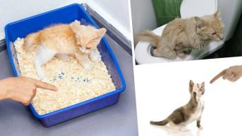 Cómo entrenar a tu gato para que vaya al baño