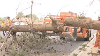 Gente se vio afectada no solo por la caída de postes y árboles