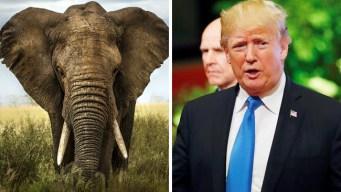 Trump revoca, por ahora, permiso de importar trofeos de caza