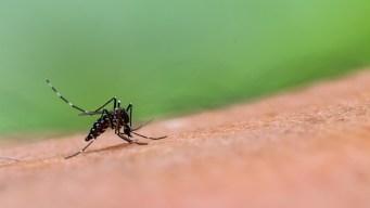 Reportan primera muerte por virus del Nilo