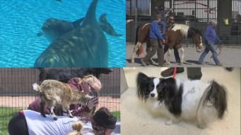 Delfines, cabras y caballos: animales de terapia en LV