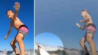 Video: impresionante encontronazo de niño con tiburón
