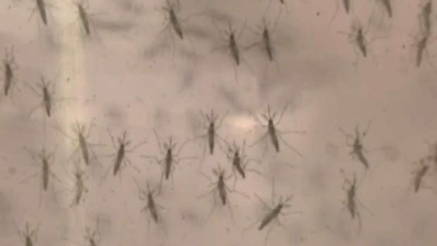 [TLMD - LV] Aumentan casos del Virus del Nilo Occidental en el Condado Clark
