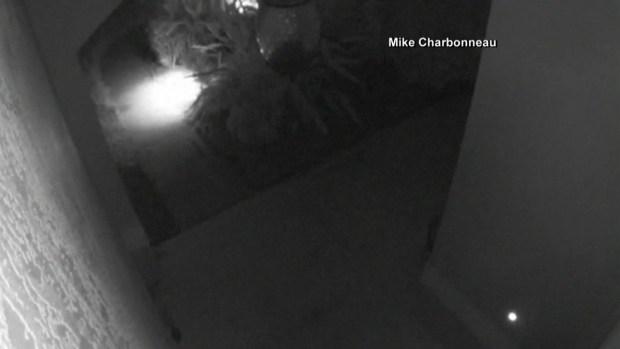 [TLMD - MIA] Captan a caimán moviendo muebles de patio