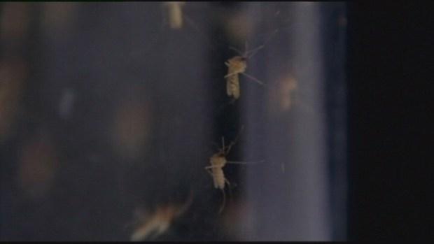 Primer caso con virus del Nilo en el Condado Clark