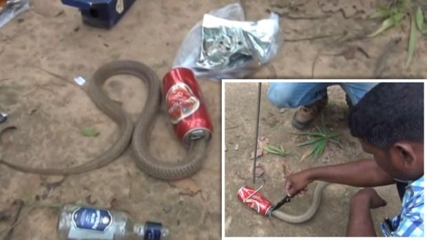 [TLMD - NATL] ¿Valientes o imprudentes? Rescatan a cobra venenosa atrapada en lata