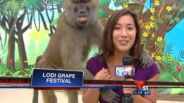 Video: Mono grosero agarra seno de reportera