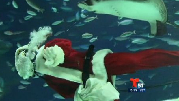 Video: Santa Claus nada entre tiburones