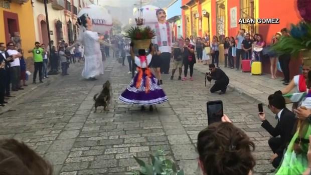 [TLMD - LV] Furor en México por perrito callejero bailarín