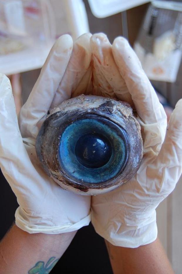 Galería: Hallan enorme ojo en la playa