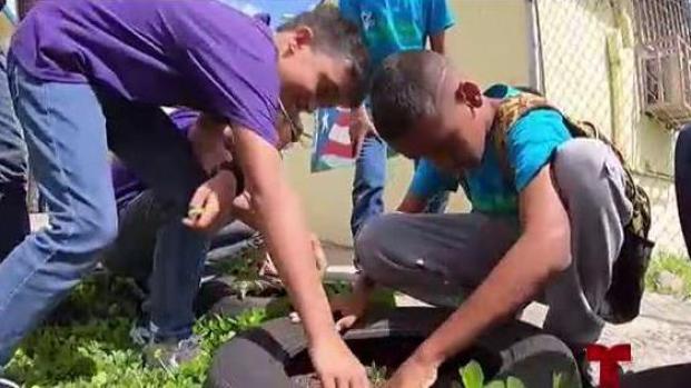 [TLMD - PR] Escuela se convierte en motor de recuperación comunitaria