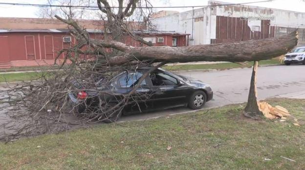 Viento brutal: hombre termina atrapado tras caída de enorme árbol