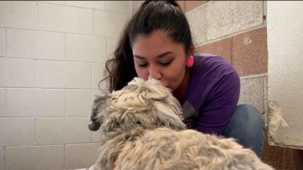 Albergue para mascotas de relaciones abusivas
