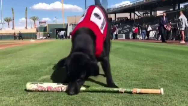 Finn: el recogebates del equipo de béisbol