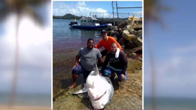 Pescador cuenta cómo capturó enorme tiburón