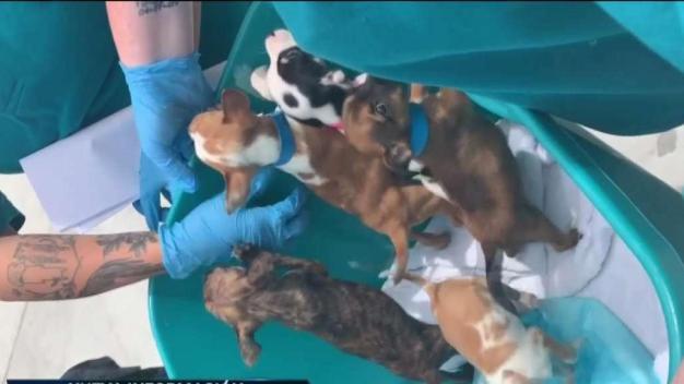 Decenas de cachorros en malas condiciones en LV