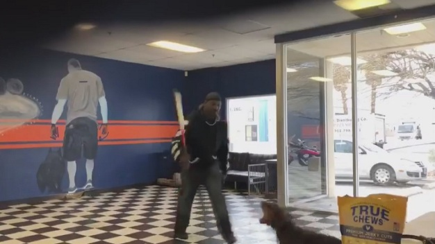 Video muestra a entrenador de perros usando un bate en animales