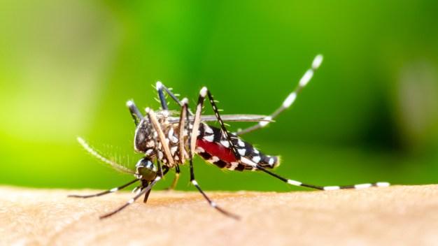 SNHD declara brote de virus del Nilo Occidental