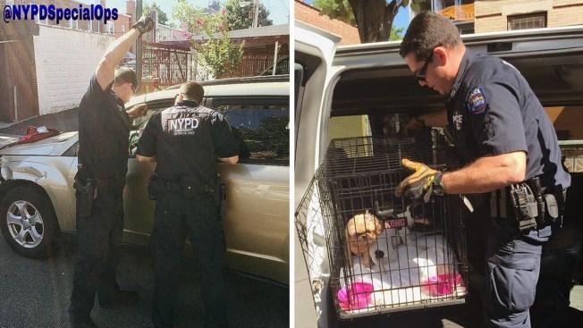 Brooklyn: Rescatan perritos atrapados en un auto