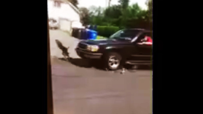 Captan en video brutal atropello a patitos