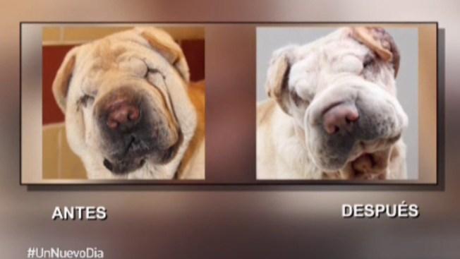 ¡Insólito! Cirugía estética para mascotas
