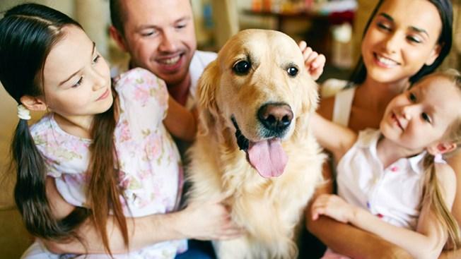 ¿Tienes todo lo esencial para adoptar una mascota?