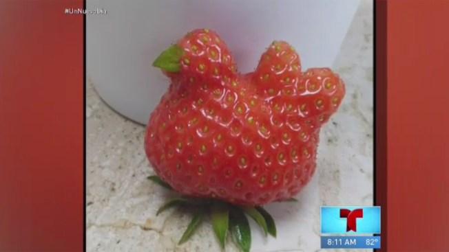 Una extraña fresa causa sensación