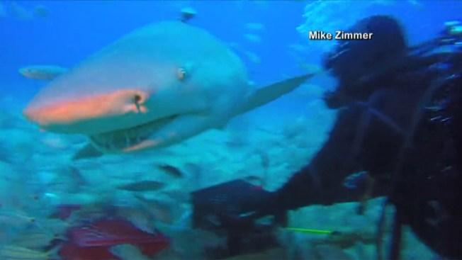 En video: Tiburón curioso muerde una cámara