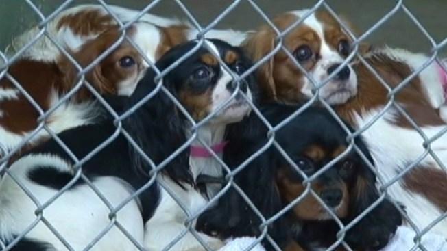 Abandonan decenas de perros