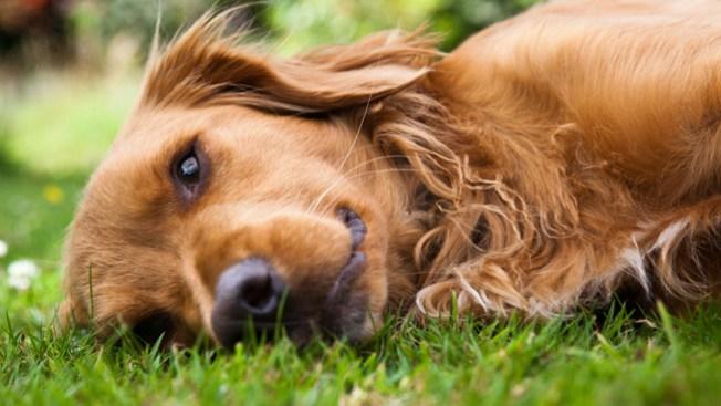Demanda a la Policía por matar sus perros
