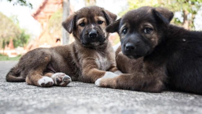 Mueren quemados unos 40 perros