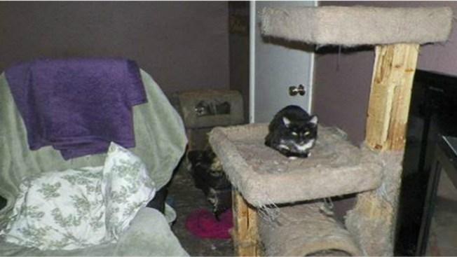 Eutanizan 153 gatos enfermos y salvajes