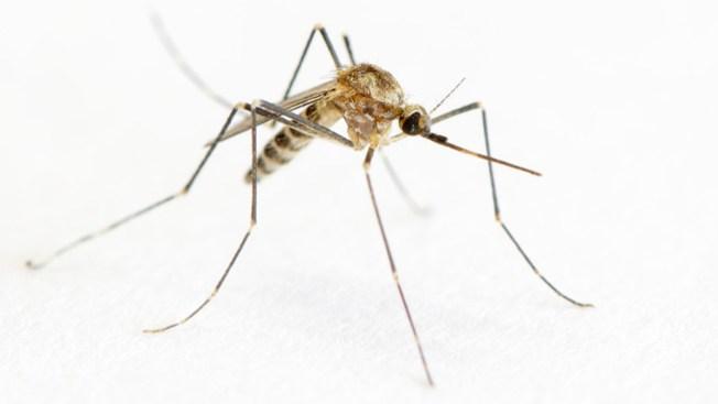 Alerta por brote de mosquitos