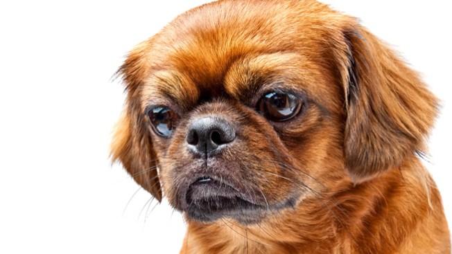 Cientos de perros necesitan un hogar