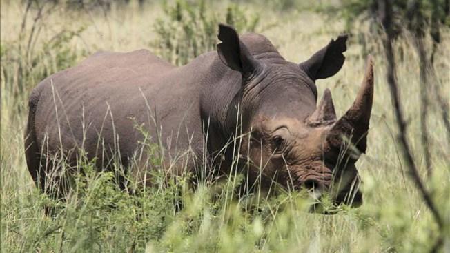Matan a 455 rinocerontes en 2012