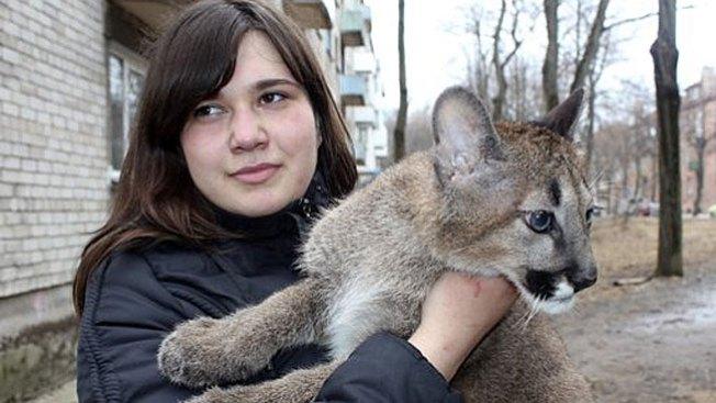 Mujer vive con tres pumas en su casa